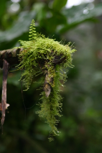 Ferns growing on moss growing on a fallen branch.
