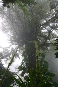 sanat-elena-cloud-forest-046