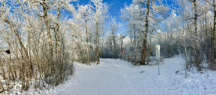 Where the trails converge, you're greeted with this!