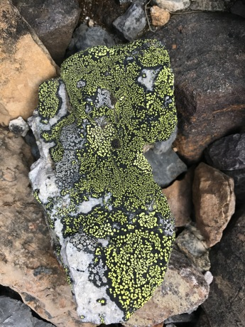 I can never get enough of the beauty of lichen!